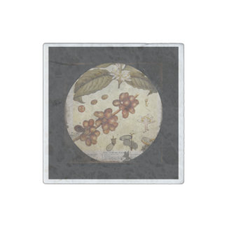 Botanical Drawing of Coffee Plant Stone Magnet