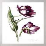 Botanical drawings posters