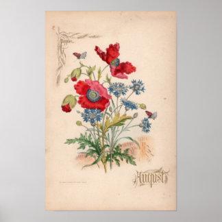 Botanical Engravings, August Poster