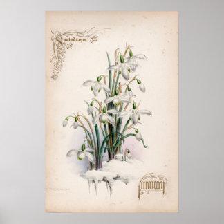 Botanical Engravings, January Poster