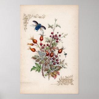 Botanical Engravings, November Poster