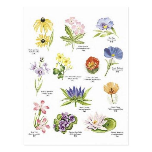 Botanical flower illustrations postcard