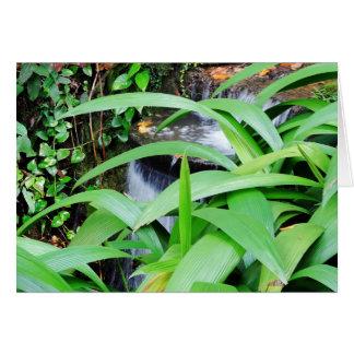 Botanical Garden in Rio Card