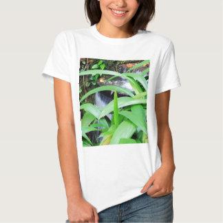 Botanical Garden in Rio T Shirt