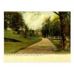 Botanical Gardens, Bronx New York 1905 vintage Post Cards