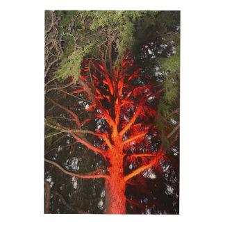 BOTANICAL GARDENS HOBART TASMANIA RED GLOW ON TREE WOOD WALL ART