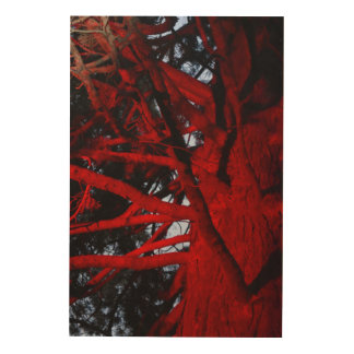 BOTANICAL GARDENS HOBART TASMANIA TREE WITH LIGHTS WOOD WALL ART