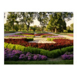 Botanical Gardens, the annuals, Montreal, C Post Card