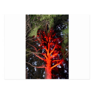 BOTANICAL GARDENS TREE WITH RED LIGHTS HOBART POSTCARD
