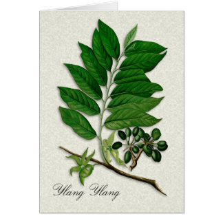 Botanical illustration of Ylang Ylang blank card
