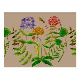 Botanical Illustration on Postcard