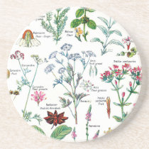Botanical Illustrations Coaster
