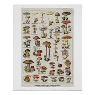 Botanical Mushrooms Chart