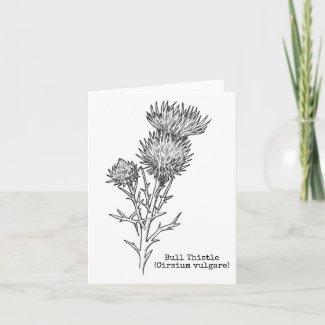 Botanical Notecard Series: Bull Thistle