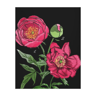Botanical | Pink Peony flower Stretched Canvas Print