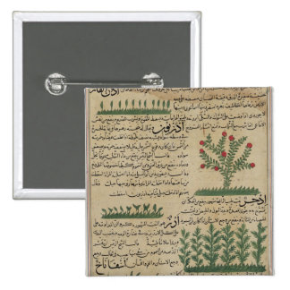 Botanical plants, illustration from 'The Pinback Button