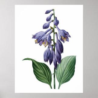 Botanical PREMIUM QUALITY print of day lily