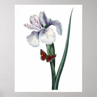 Botanical PREMIUM QUALITY print of iris