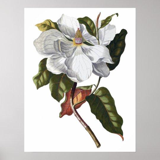 Botanical PREMIUM QUALITY print of magnolia