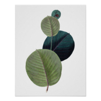 Botanical PREMIUM QUALITY print of manihot leaves
