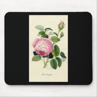 Botanical Print - Cabbage Rose (Rosa Centifolia) Mouse Pad