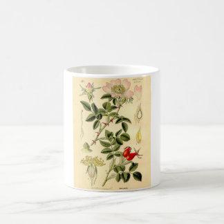 Botanical Print - Dog Rose (Rosa Canina) Coffee Mug