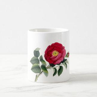 Botanical Print - French Rose (Rosa Gallica) Coffee Mug