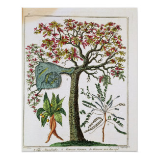Botanical print from 18th century