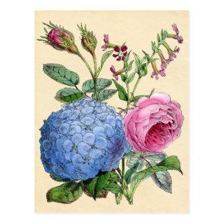 Botanical Print - Hydrangea & Roses Postcard