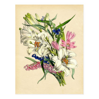 Botanical Print - Lily and other blooms Postcard
