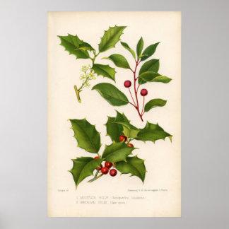 Botanical Print - Mountain & American Holly