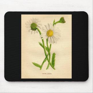 Botanical Print Ox-Eye Daisy Leucanthemum vulgare Mouse Pad
