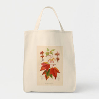 Botanical Print - Red Maple (acer rubrum) Canvas Bags