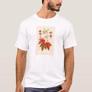 Botanical Print - Red Maple (acer rubrum) T-Shirt