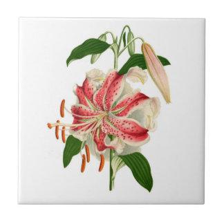 Botanical Print Red Tiger Lily lancifolium rubrum Ceramic Tile