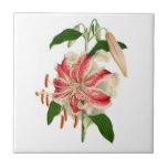 Botanical Print Red Tiger Lily lancifolium rubrum Small Square Tile