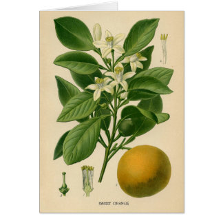 Botanical Print - Sweet Orange Card