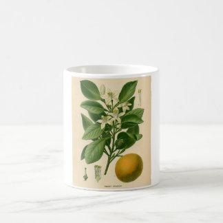 Botanical Print - Sweet Orange Coffee Mug