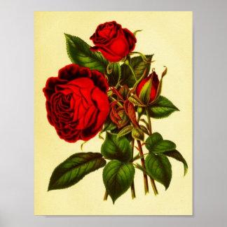 Botanical Red Rose Poster