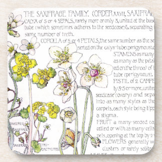 Botanical Saxifrage Wildflower Flowers Coaster