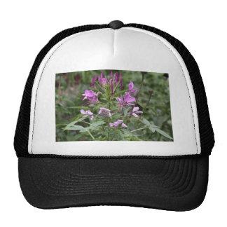 Botanical Series Trucker Hat