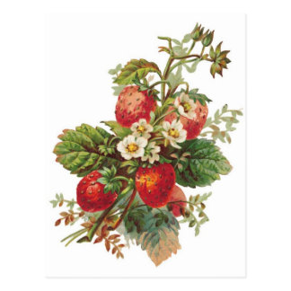 botanical strawberries postcard