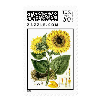 Botanical Sunflower stamp FLOWERS GARDENING STAMPS