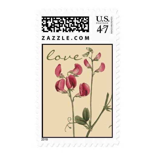Botanical Sweet Pea Flower Love Postage