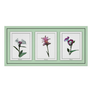 Botanical Trio Floral Poster