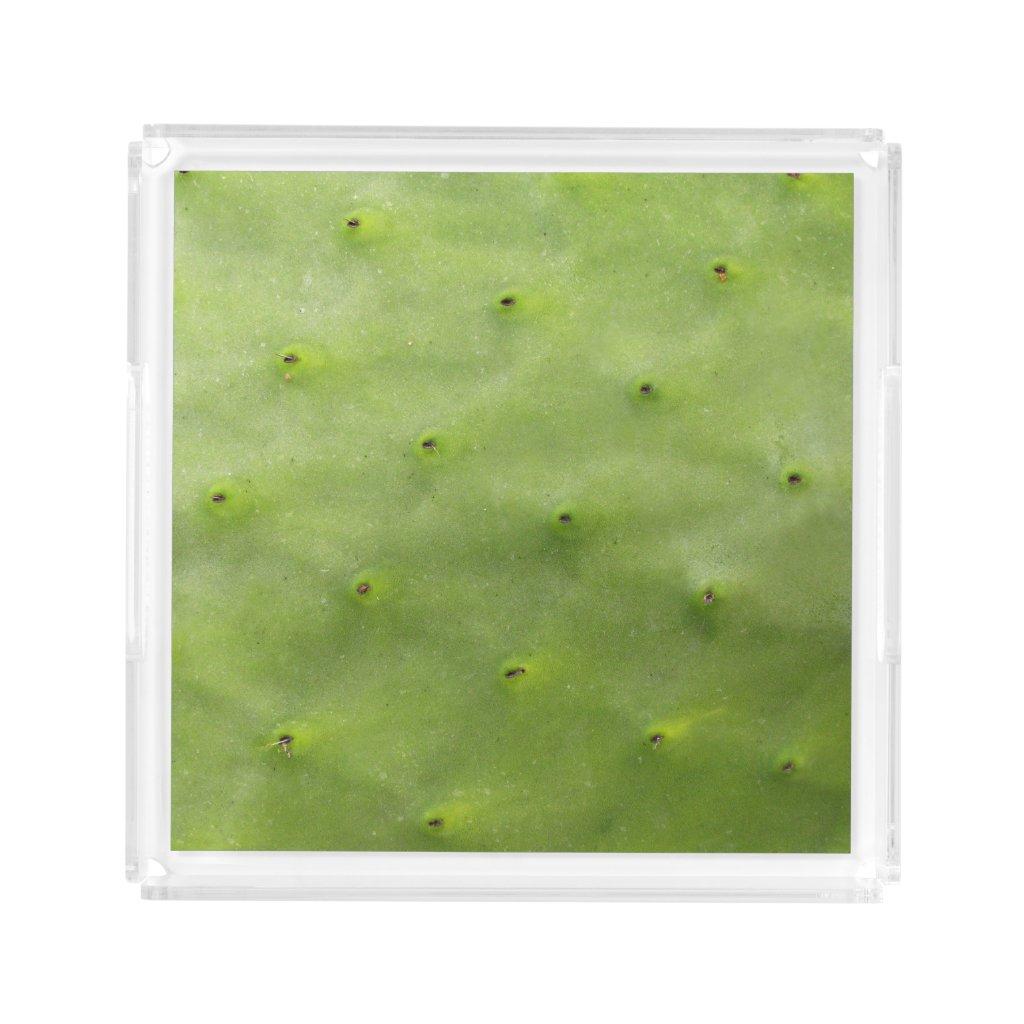 Botanical Tropical Green Cactus Photo