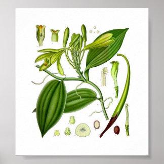 Botanical Vanilla Poster