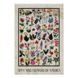 Botanical Wild Flowers of America Antique Floral Print