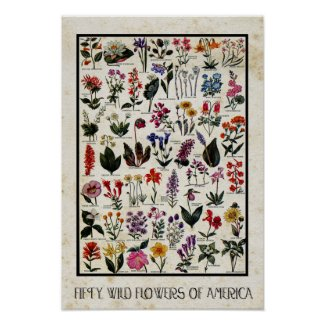 Botanical Wild Flowers of America Antique Floral Poster