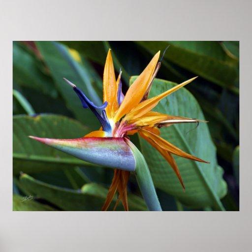 Botanicals 28 de Hawaii Póster